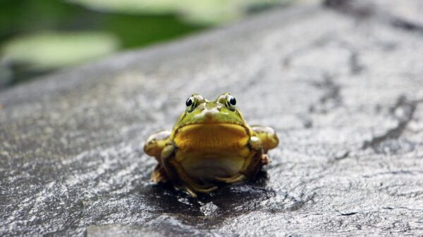 How To Get Rid of Frogs In Pool Naturally